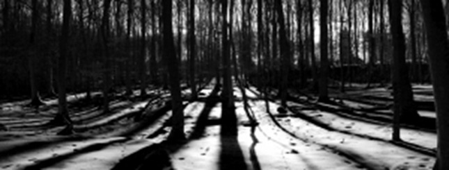 1327224_shadows_in_the_forrest